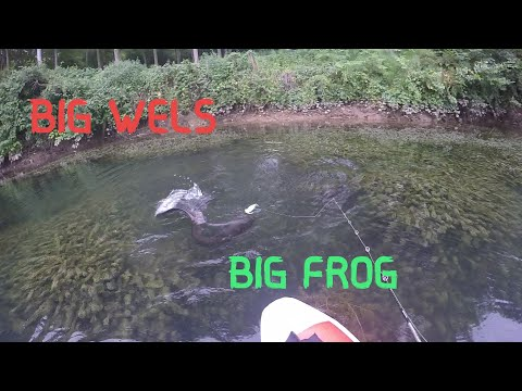 Silure à La Frog En Float-tube,attaque En Direct Dans Les Palmes - Go Pro HD