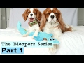 The Bloopers Series | Herky & Milton Cavalier King Charles | Funny Dog Puppy