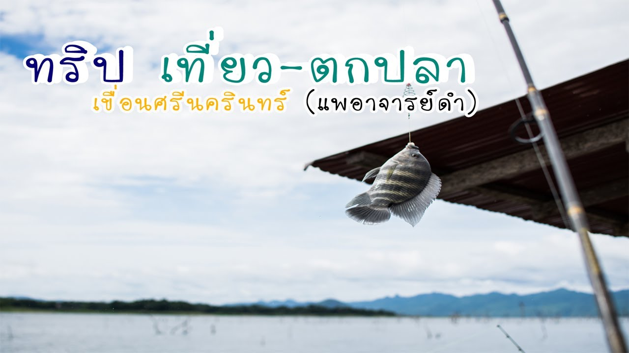 ทริป เที่ยว-ตกปลา เขื่อนศรีนครินทร์ (แพอาจารย์ดำ)