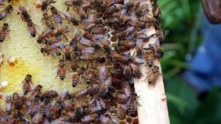 San Francisco Beekeepers Association