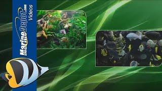 New Life Spectrum AlgaeMAX and Algae Gel Fish Food