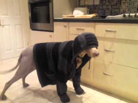 Stupid Dog Wearing Hoodie