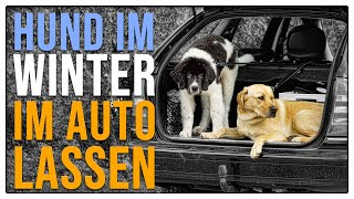 TGH 113 : Hund im Winter im Auto lassen  - Hundeschule Stadtfelle