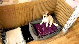 Удобный разборный вольер для собак. Где держать собаку в квартире?