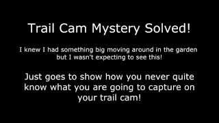 Wildlife Gadget Man - Mystery Creature On Trail Cam SOLVED!
