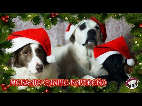 Mensaje Canino de Navidad - Los perros de Dog Paw hablan con la Navidad