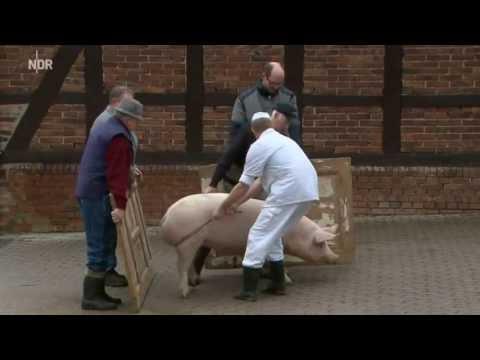 Ein Schwein fuer