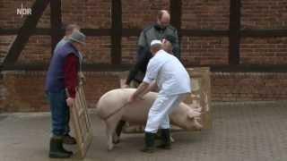 Ein Schwein fuer Bessingen