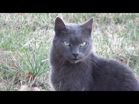 Pretty Cat Visitor