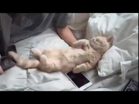 "Cat Gets Tucked In Bed When He Gets Sleepy… ""Awwww, Now This Is Just Purrrrrfect"""