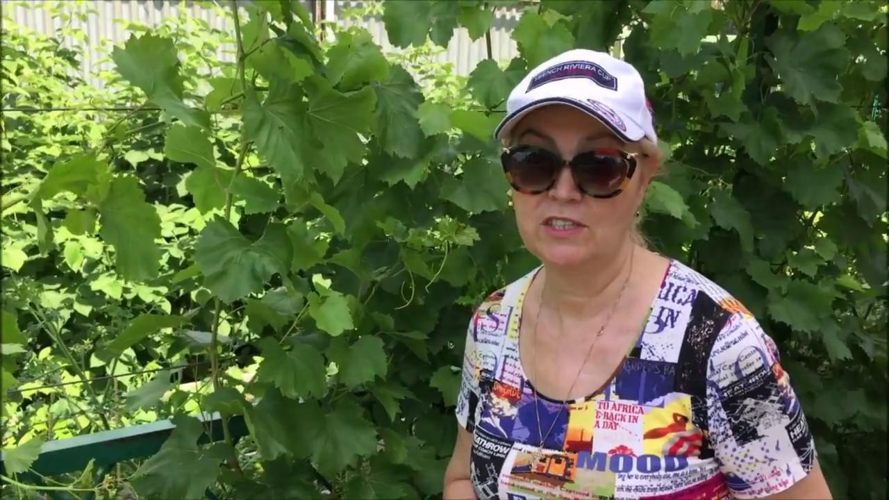 Что делать с виноградом летом/ Мой сад и огород