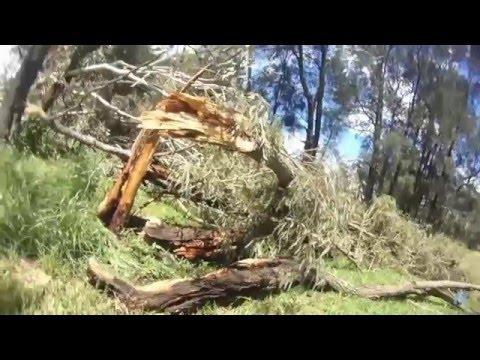 SYDNEY'S MASSIVE 5 MINUTE WIND DESTRUCTION