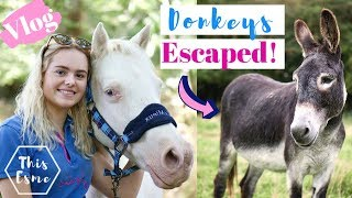 Vlog | Donkeys Escaped! Tack Room Cleaning + Mickey Walks | This Esme