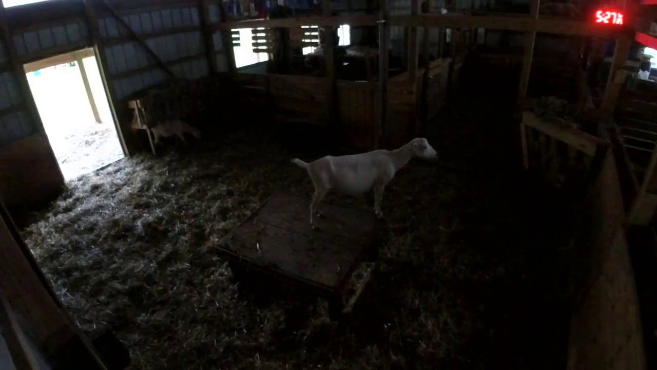 Fly on the wall Barn cam - YouTube