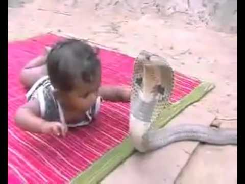 1 year old kid playing with COBRA. (Snake Attack. King ...