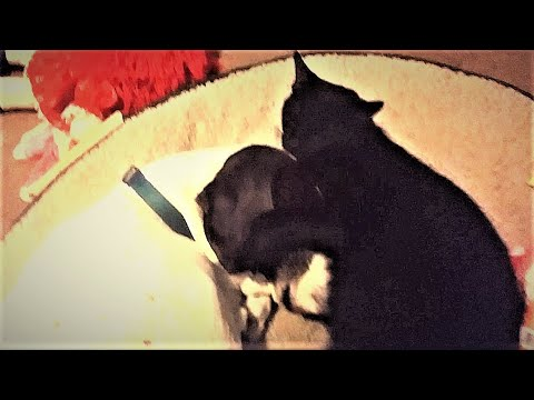 Cat Covering Dog's Eyes While Licking