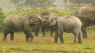 HE JUST INVENTED NËW METHOD TO SCARE AWAY ELEPHANTS || হাতী খেদাৰ নতুন কৌশল
