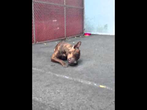 Missy A0977578 located NYC macc