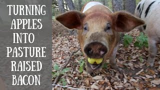 🍂🐔🐖Weekly Homestead Fall Update Farm Tour🍂🐖🐔