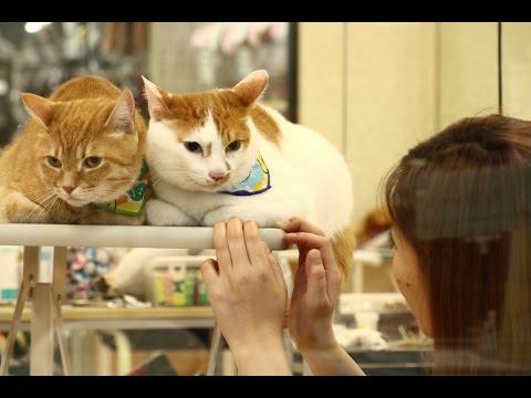 プロにお願いした猫どものシャンプーふたたび with 犬のライヤ姉さん
