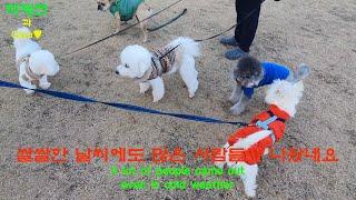 코코와 동네 친구들, 그리고 강아지 다이어트 간식. C…