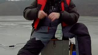 Perch Bitting Поклёвка мерного Окуня Зимняя Рыбалка My Fourth Shorts Video