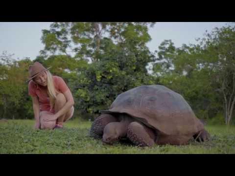 galapagos-giant-tortoise---alison's-adventures