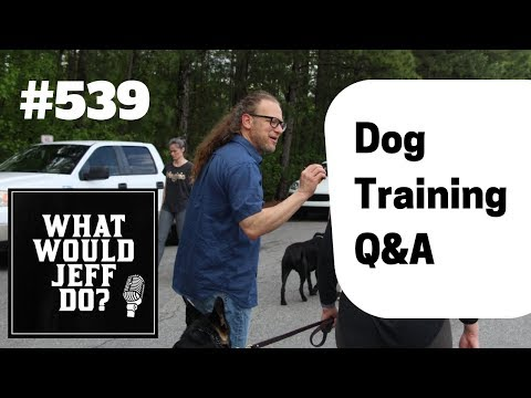 dog-food-aggression-|-dogs-and-separation-anxiety-|-what-would-jeff-do?-dog-training-q-&-a-#539
