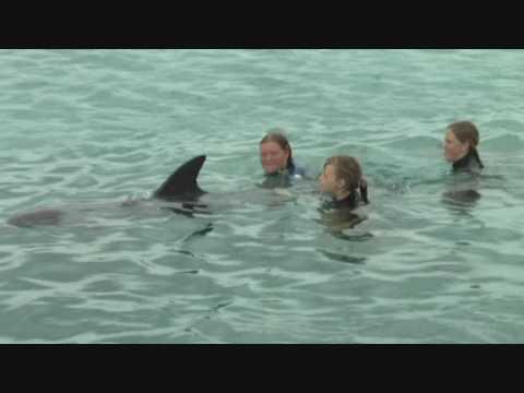De Swim @ Dolfijnen Academy Curacao