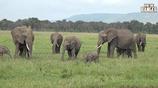 Elephant Herd At The Musiara Marsh, Maasai Mara