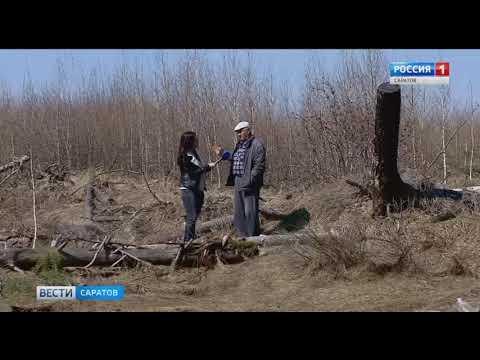Лес начали возрождать после пожара в Базарном Карабулаке
