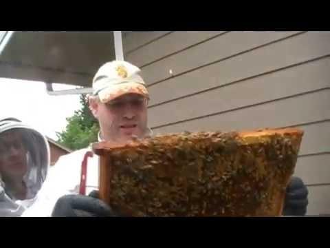 LCBA Spring hive management Workshop part1