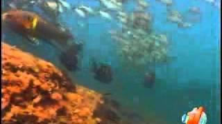 El pintor de arrecifes