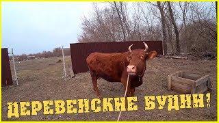 Деревенские будни / Коровы на прогулке / Гуси садятся / Выпустили цыплят / Несчастный случай