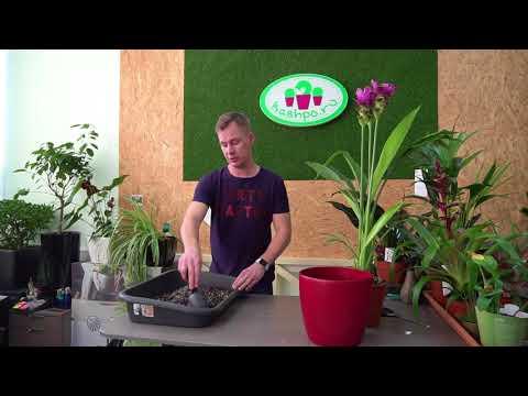 Вопрос: Какое растение купить в дом, чтобы особо за ним не ухаживать?