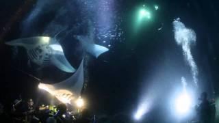 Kona Manta Ray Night Dive