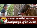 Only lady who grows bull for Jallikattu in Madurai