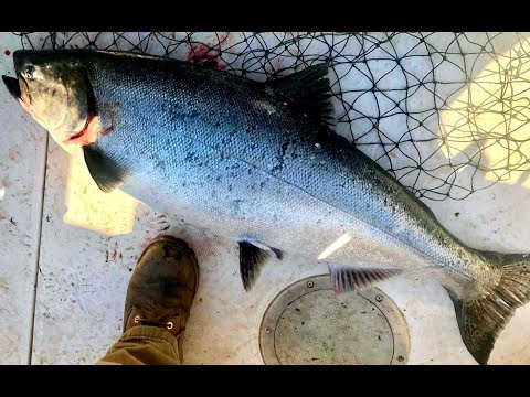 World's Best Fishing Show Monster King Salmon Lake Michigan Out Of Indiana 4K