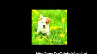 Potty Training Methods For Puppies