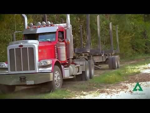 Weyerhaeuser Lumber Mill Tour In Magnolia Mississippi