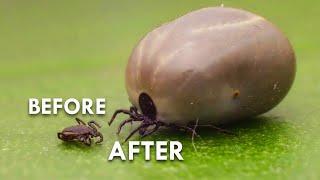 ticks-the-actual-worst