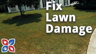 Do My Own Lawn Care  -  How to Fix Lawn Damage