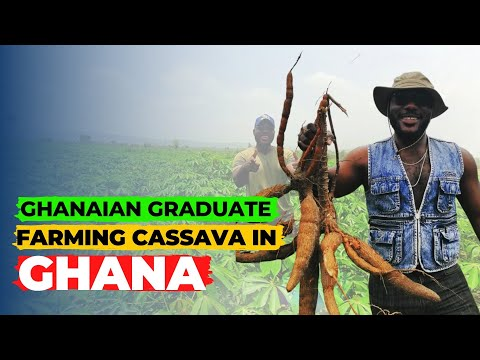 Why a Ghanaian graduate from Accra is doing 'CASSAVA' farming | agric | agriculture