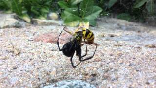 Black Widow vs. Yellow Jacket!