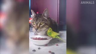 Try Not to Laugh Hilarious Cat Compilation Funny Videos 2018