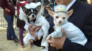 Tompkins Square Halloween Dog Parade Pt.2   2013