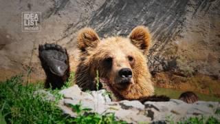 Как происходит реабилитация диких животных
