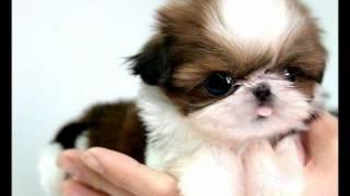 Roliga och söta Hundar och Katter ♥