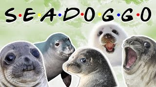 Friends - Seal Edition