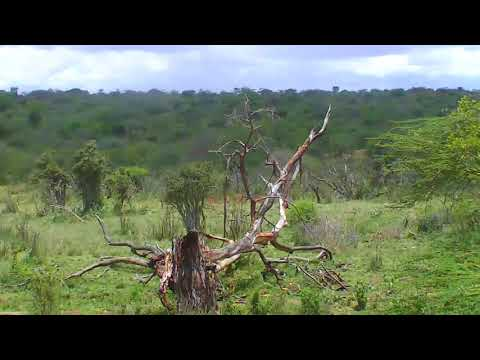 African River Wildlife Cam 03-15-2018 03:16:18 - 04:16:19